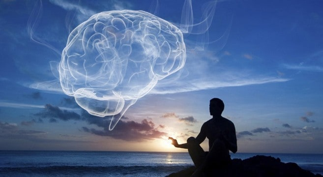 Den biologiske hjerne